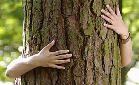 élő fa ízületi kezelés)