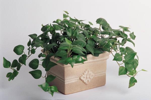 A leger sebb m regtelen t l gtiszt t szoban v nyek for Top 20 indoor plants